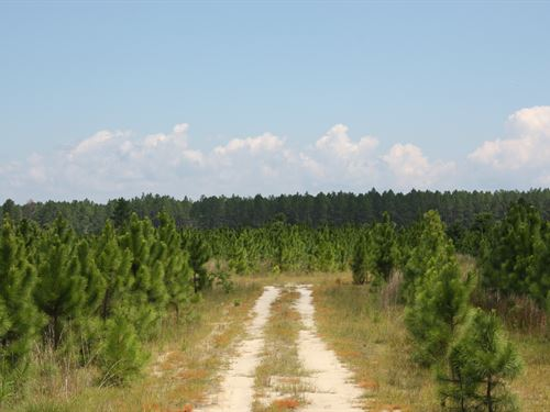 Bruce Forest Timberlands : Tallahassee : Jackson County : Florida