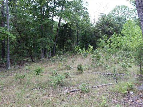 40 Acre Recreational Property OR : Ava : Douglas County : Missouri