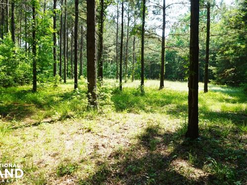 Akron Hunting And Timber Investment : Akron : Hale County : Alabama
