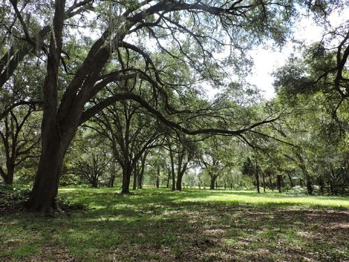 Lush Pasture With Live Oaks, A-551 : Hawthorne : Alachua County : Florida