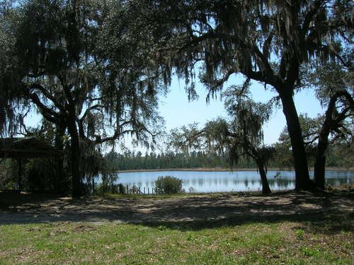 350 Acre Ranch- A-503 : Melrose : Bradford County : Florida