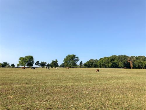 20 Rolling, Fenced Acres With Pond : Mount Vernon : Franklin County : Texas