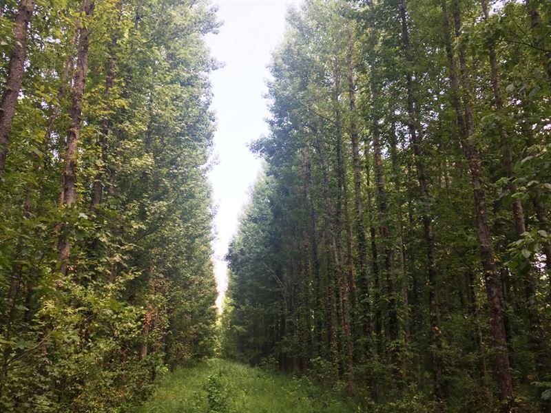 Mayfield Creek East Tract : Wickliffe : Ballard County : Kentucky