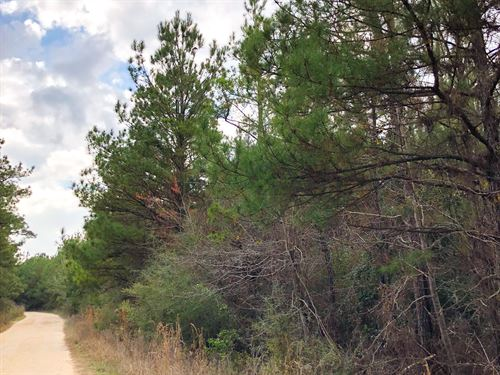 104 Ac Tom Marsh Road : Livingston : Polk County : Texas