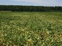 Cahoon Family Land : Columbia : Tyrrell County : North Carolina