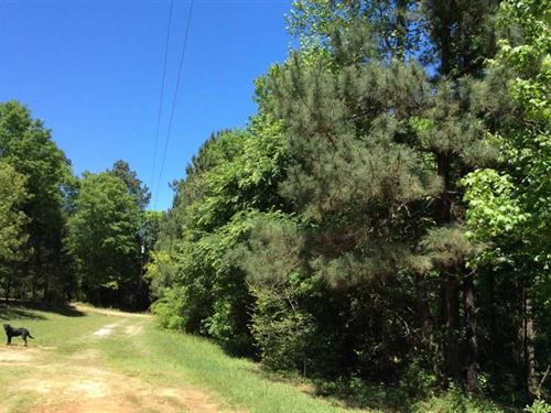 11.5 Wooded Acres Minutes From : Nacogdoches : Texas