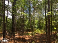 Old Georgetown Road Wooded Homesite : Cassatt : Kershaw County : South Carolina