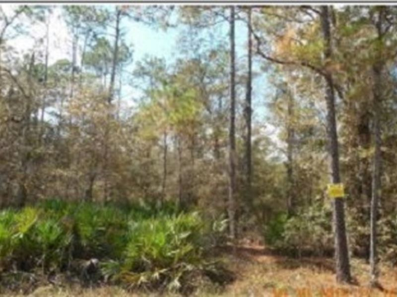15.43 Acres With Creek A-474 : Gainesville : Alachua County : Florida