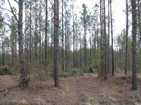 Patsaliga 350 : Dozier : Crenshaw County : Alabama