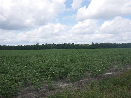 Roach Farm Parcel 1 : Pembroke : Bulloch County : Georgia