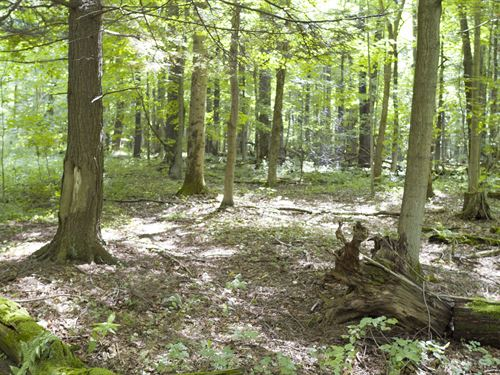 Wooded Building Lot With Frontage : Cazenovia : Madison County : New York