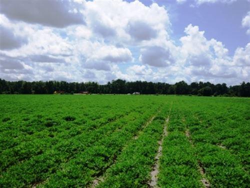 Rad Denmark Farm Tract 2 : Pembroke : Bulloch County : Georgia