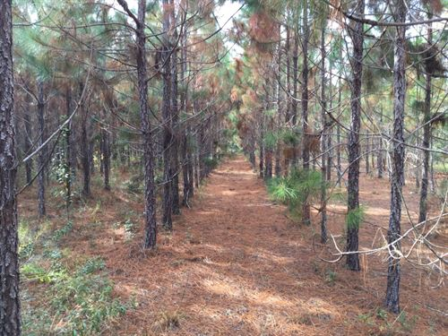 107+ Acres In Planted Pines : Live Oak : Suwannee County : Florida