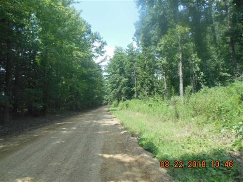 Tremendous Hunting Opportunity : Cascilla : Tallahatchie County : Mississippi