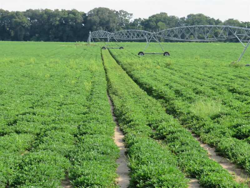 Irrigated Farm With Great Hunting : Farm for Sale in ...