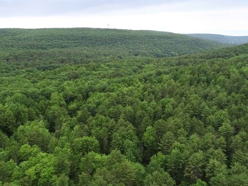 Building Site In The Woods : Coeymans : Albany County : New York