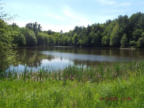 5 Acre With Access To Black River : Town Of Pine Valley : Clark County : Wisconsin