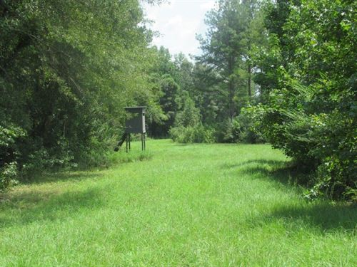 Exceptional Property In Macon Co : Notasulga : Macon County : Alabama