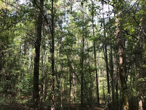 490.84 Acres Fred Bacot Road Pike : Summit : Pike County : Mississippi