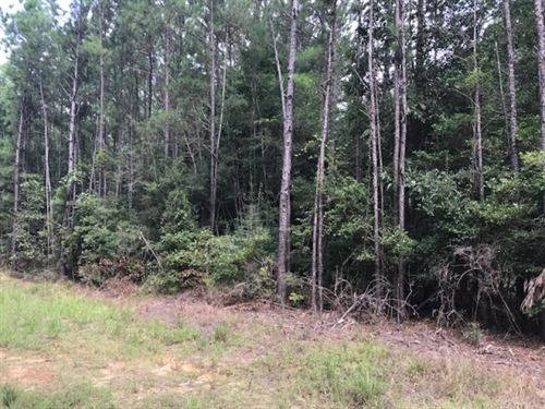 101 Acres Fred Bacot Road Pike Coun : Summit : Pike County : Mississippi