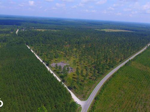 Columbus County Hunting Land : Lake Waccamaw : Columbus County : North Carolina