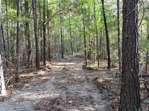 59.22 Acres of Timber And Hunting : Harrisville : Simpson County : Mississippi