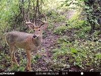 Premium Hunting Property For Sale : La Valle : Richland County : Wisconsin