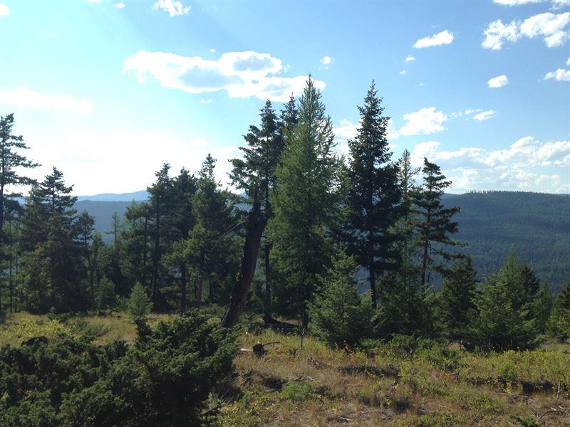 Jim Creek 40 Acres : Trego : Lincoln County : Montana