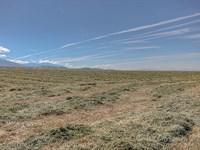 Spring Creek Elk Ranch : Townsend : Broadwater County : Montana