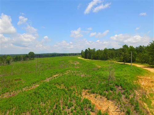 245 Acres of Pine, Hardwood And Pl : Jumpertown : Alcorn County : Mississippi