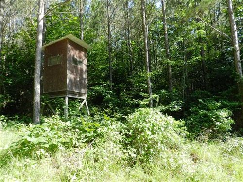 197 Acres Winston County, Alabama : Double Springs : Winston County : Alabama