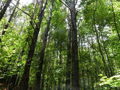 163 Acres Near Natchez Trace Parkw : Tishomingo : Mississippi