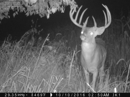 Log Home, Prime Whitetail Hunting : Wisconsin Dells : Columbia County : Wisconsin