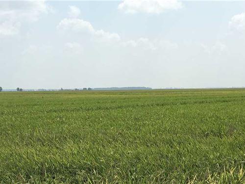 386 Acre Row Crop Farm, Poinse : Waldenburg : Poinsett County : Arkansas