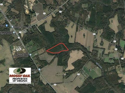 23 Acres of Timber Land For Sale : Topping : Middlesex County : Virginia