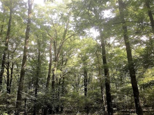 195 Acres In Hinds County In Clinto : Clinton : Hinds County : Mississippi