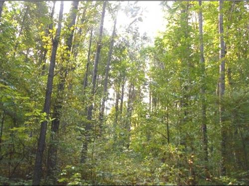16 Acres In Choctaw County : French Camp : Choctaw County : Mississippi