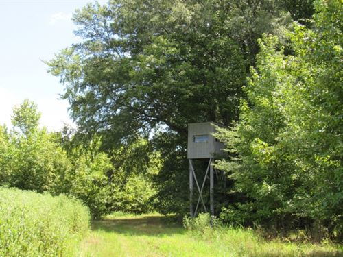 996 Acres In Panola County In Bates : Batesville : Panola County : Mississippi