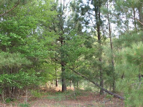 Beautiful Tranquil Wooded Homesite : De Kalb : Bowie County : Texas