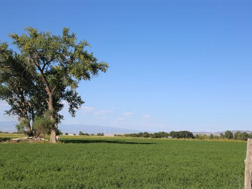 Dalia Road Farm : Olathe : Montrose County : Colorado