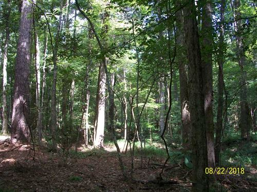 177 Acres of Hunting, Recreati : Roxie : Franklin County : Mississippi