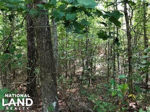 115 Ac, Hunting / Timberland Proper : Duck Hill : Montgomery County : Mississippi