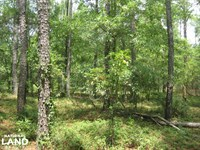 Fairview Crossroads Homesite And Ti : Pelion : Lexington County : South Carolina