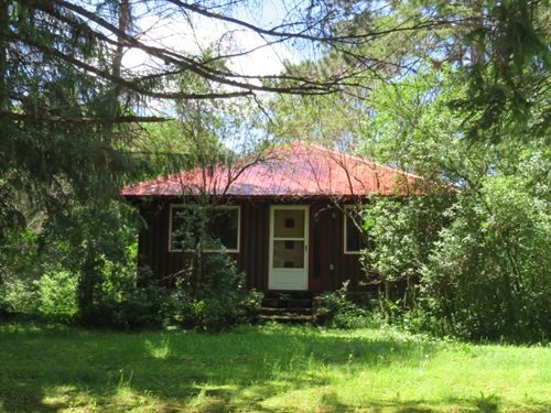 5+ Acres Ready For Horses : Winchester : Vilas County : Wisconsin