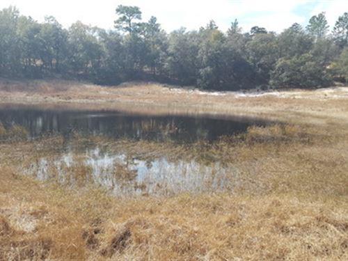 5 Ac Parcel In Melrose Landing : Hawthorne : Putnam County : Florida