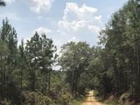 70 +/- Acres Holmes Langford Rd : Opp : Covington County : Alabama