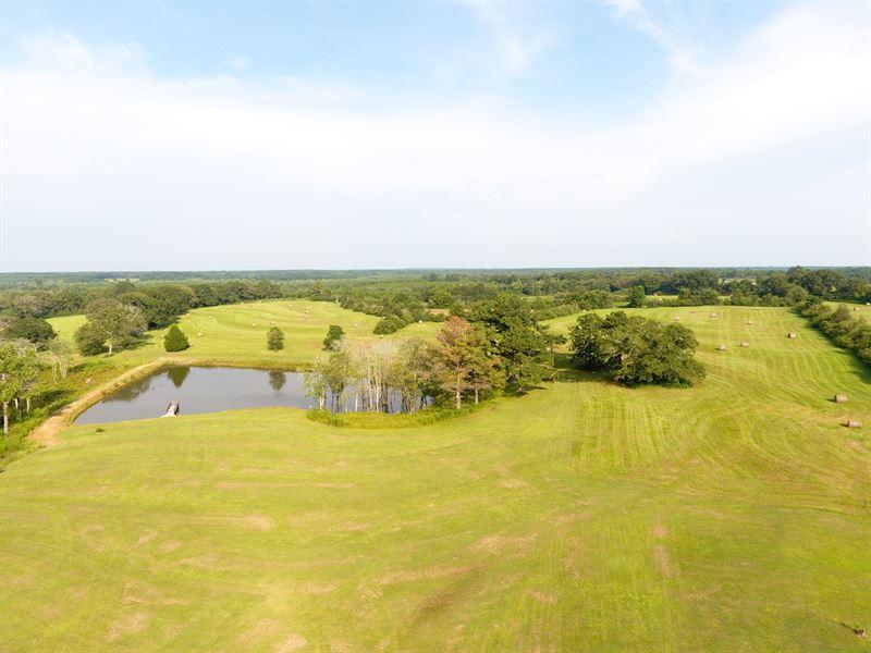 Grand Land Farm 124 +/- Acres : Opp : Covington County : Alabama