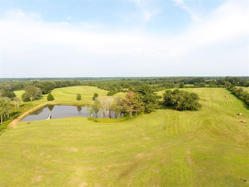 Grand Land Farm 124 +/- Acres : Opp : Covington County : Alabama