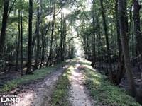 Green Swamp Hunt Club Share : Tillman : Jasper County : South Carolina