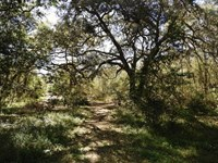 7.1 Ac Wooded Property A-567 : Melrose : Putnam County : Florida